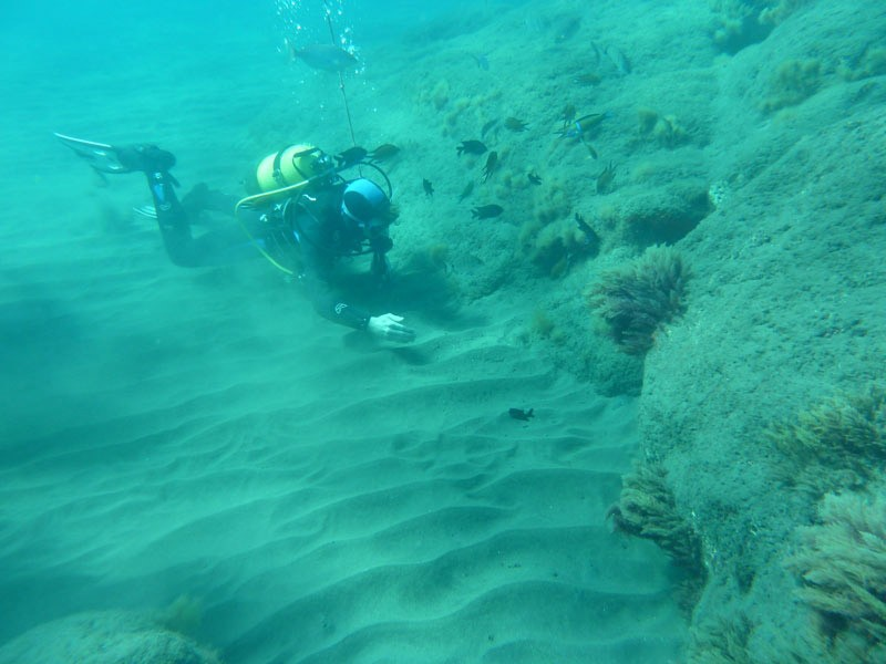 Photo Gallery Diving in Gran Canaria