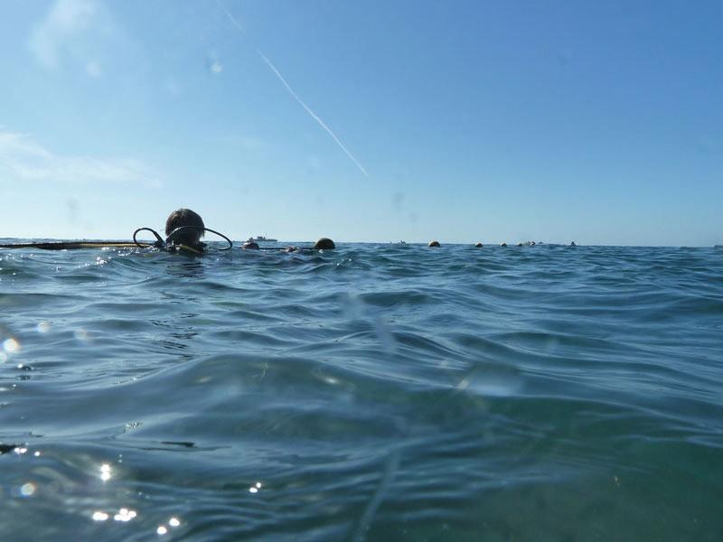 PADI Boat Certified Diver Diving