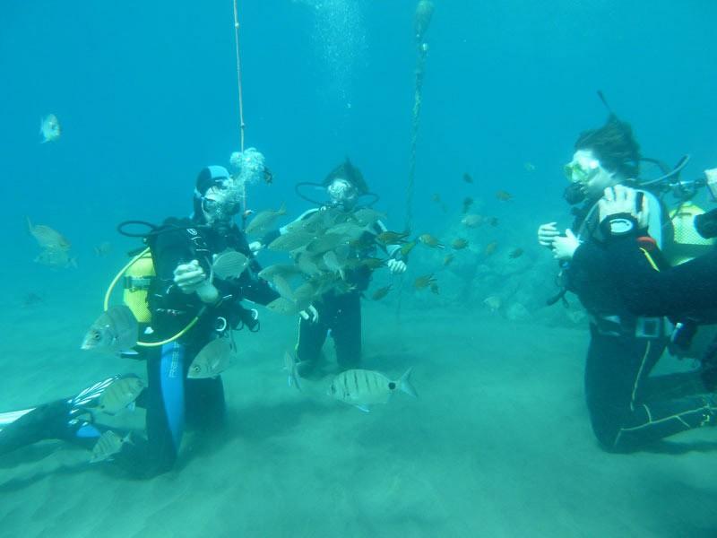 Photo Gallery PADI wreck dive